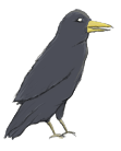 Crow Small